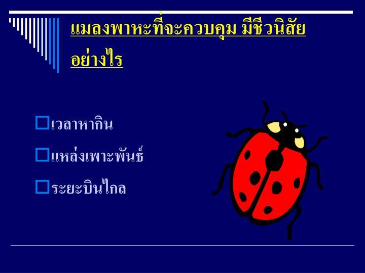 แมลงพาหะที่จะควบคุม มีชีวนิสัยอย่างไร