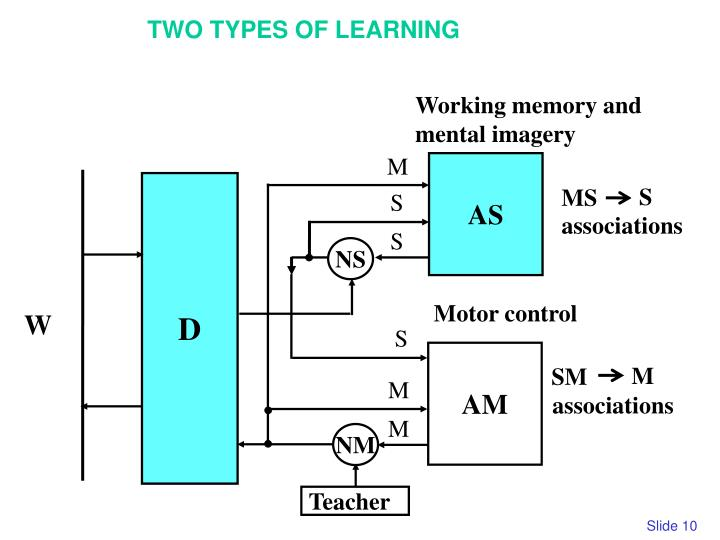 Working memory and