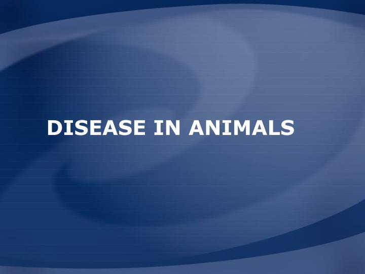 Disease in Animals