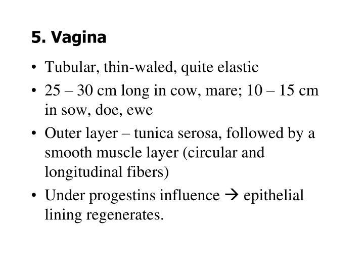 5. Vagina