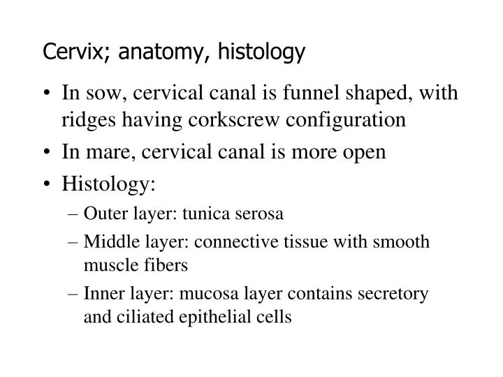 Cervix; anatomy, histology