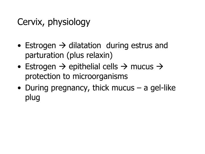 Cervix, physiology