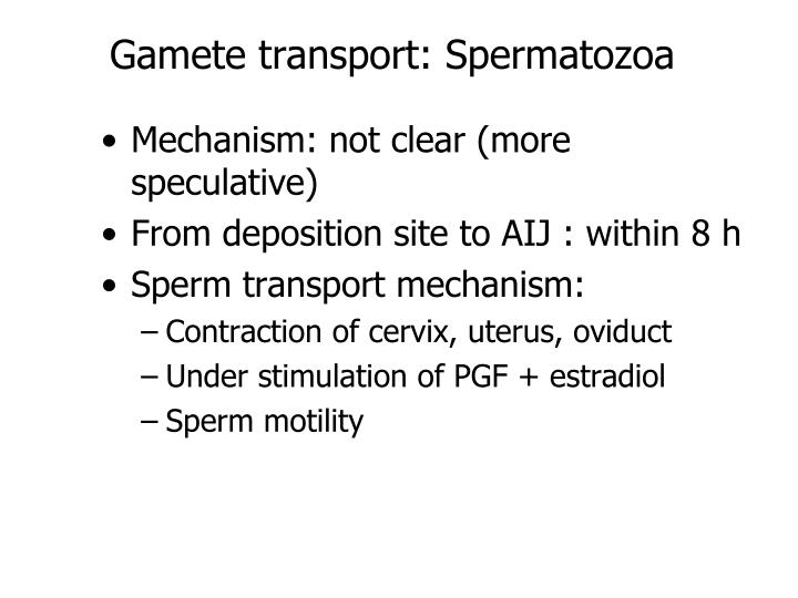 Gamete transport: Spermatozoa