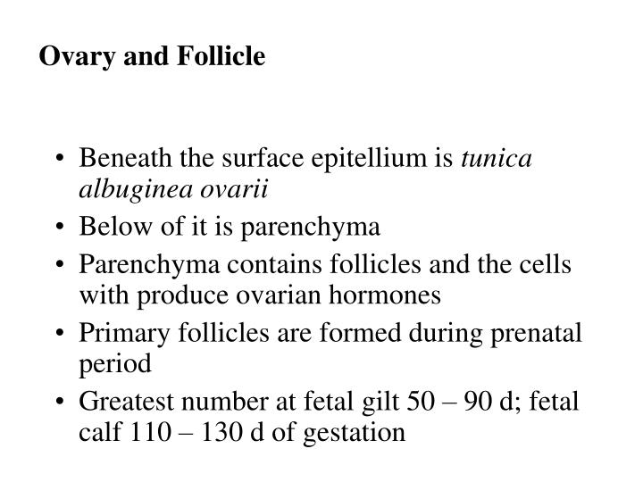 Ovary and Follicle