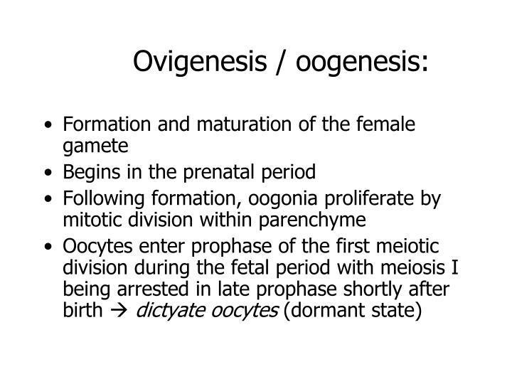 Ovigenesis / oogenesis: