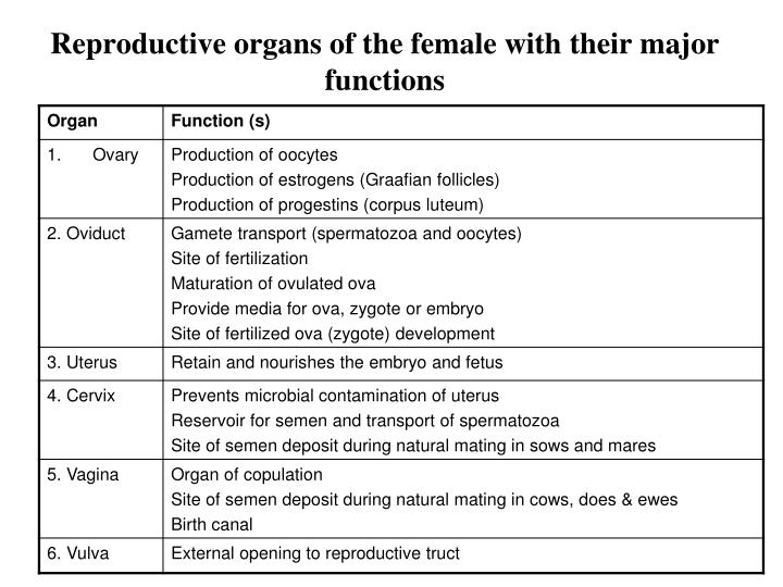 Reproductive organs of the female with their major functions