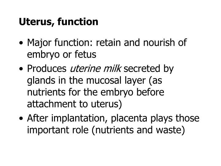 Uterus, function