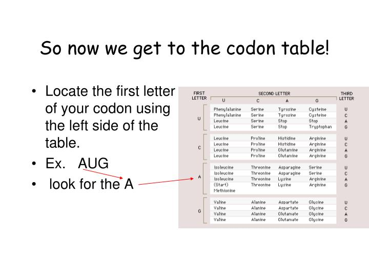 So now we get to the codon table!