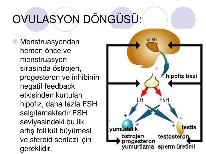 OVULASYON DÖNGÜSÜ: