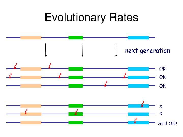 Evolutionary Rates