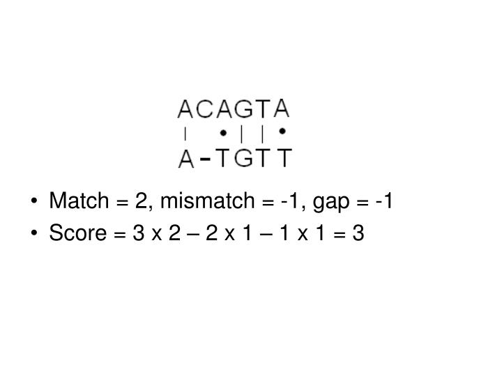 Match = 2, mismatch = -1, gap = -1