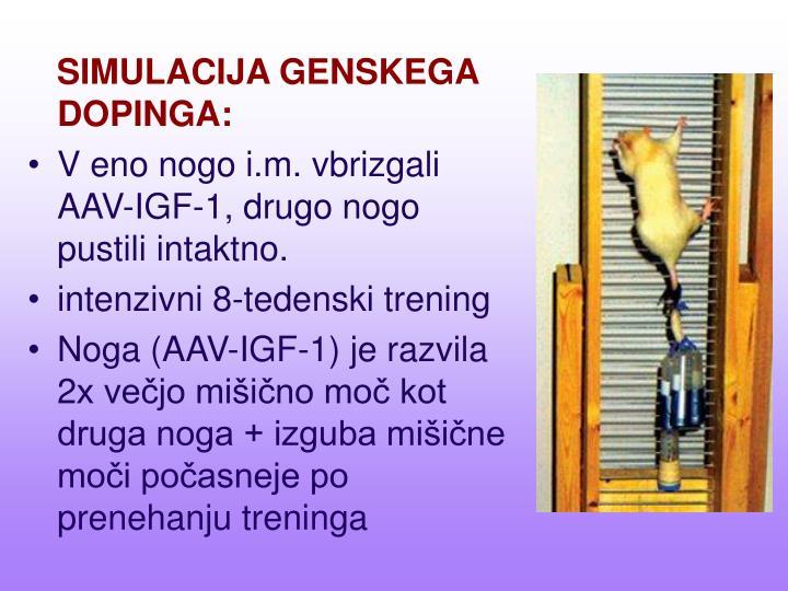 SIMULACIJA GENSKEGA DOPINGA: