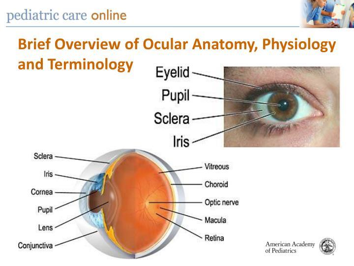 Anatomy and terminology
