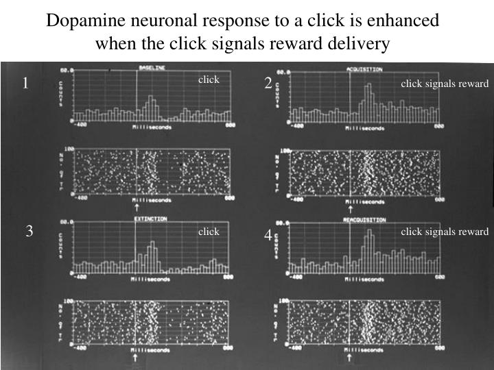 Dopamine neuronal response to a click is enhanced when the click signals reward delivery