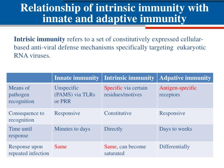 Relationship of intrinsic immunity with innate and adaptive immunity