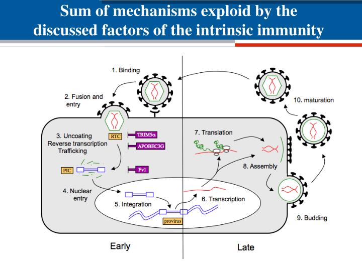 Sum of mechanisms exploid by the