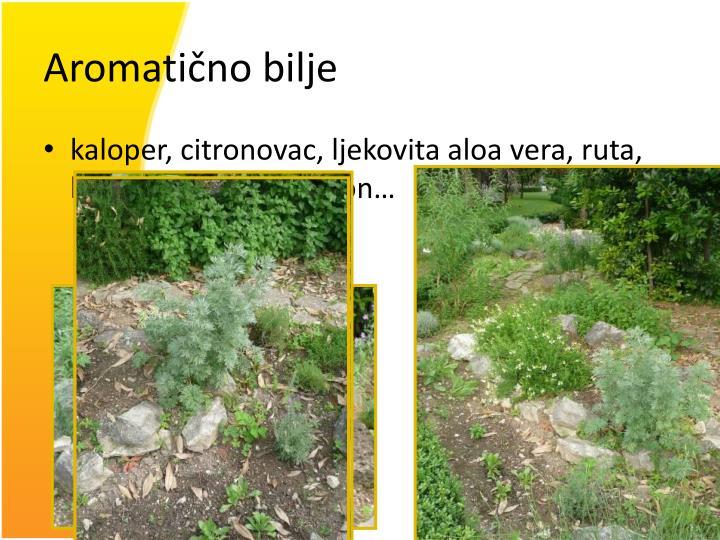 Aromatično bilje