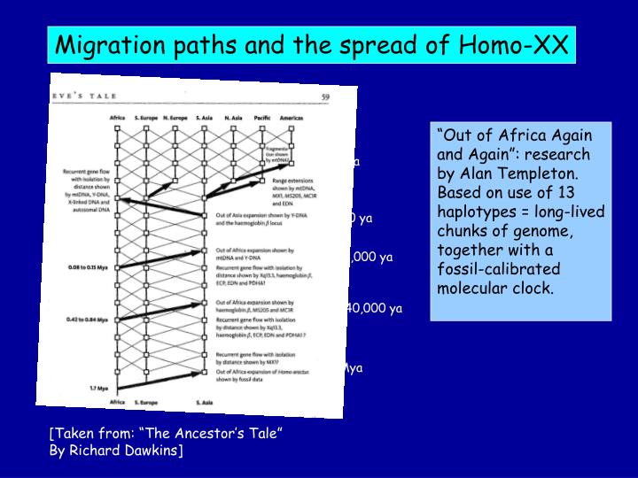 Migration paths and the spread of Homo-XX