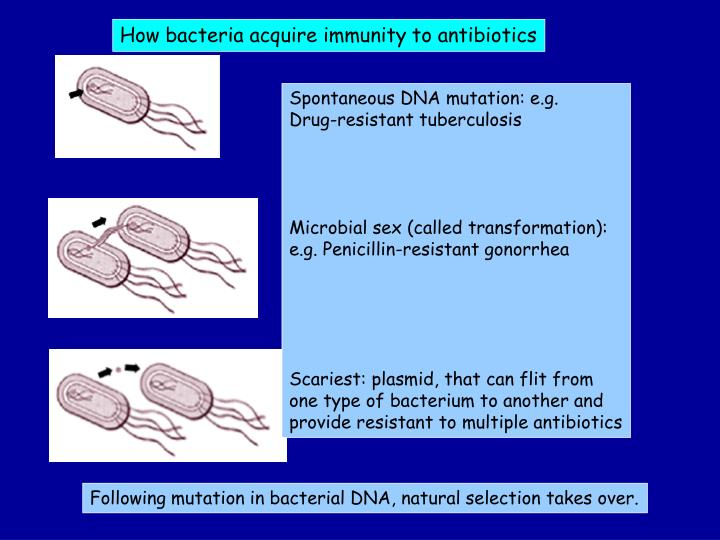 How bacteria acquire immunity to antibiotics