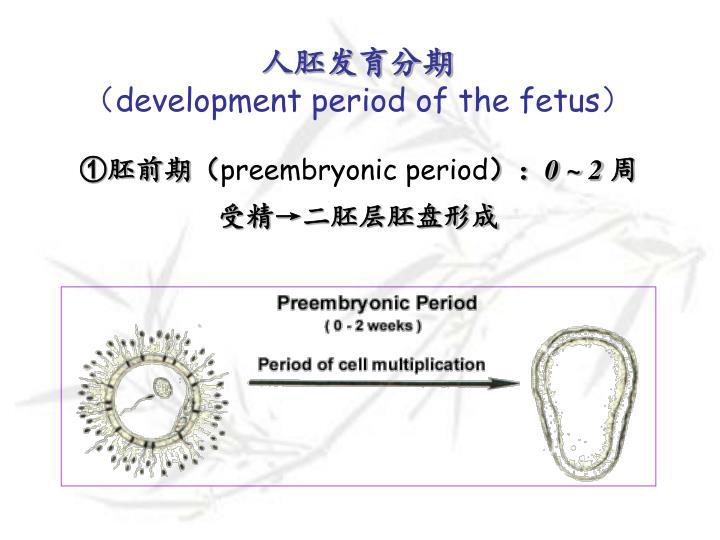 人胚发育分期