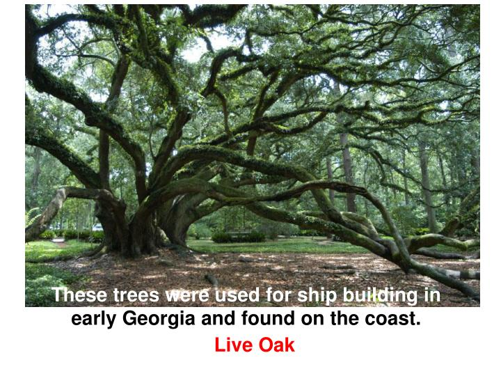 These trees were used for ship building in