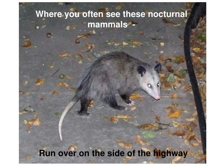 Where you often see these nocturnal mammals  -