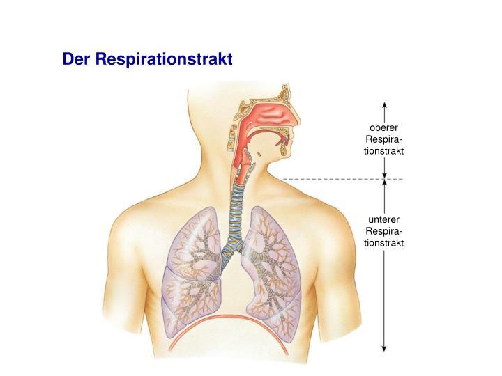 oberer Respira-tionstrakt