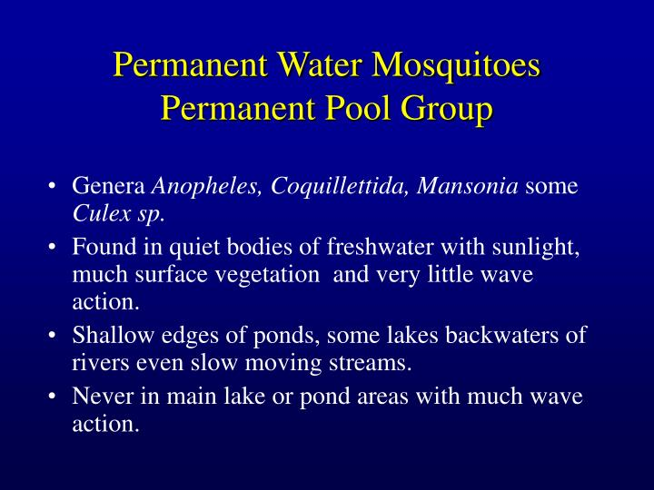 Permanent Water Mosquitoes