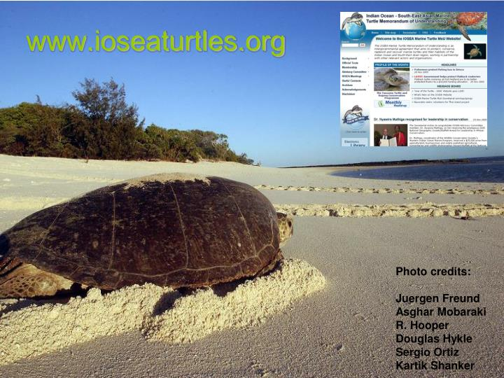 www.ioseaturtles.org