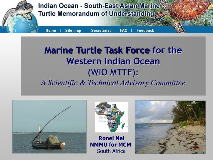 Marine Turtle Task Force