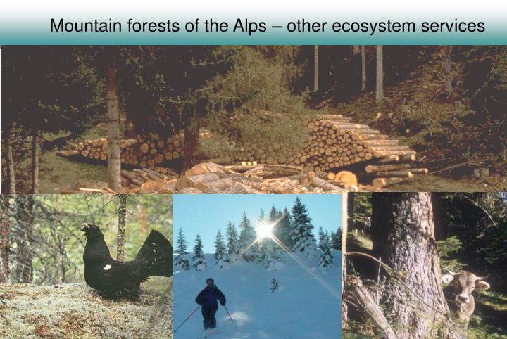 Mountain forests of the Alps – other ecosystem services