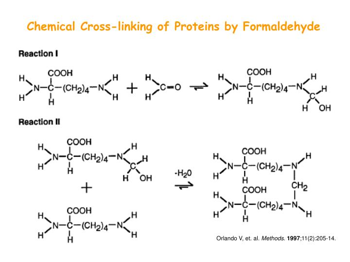 Chemical Cross-linking of Proteins by Formaldehyde