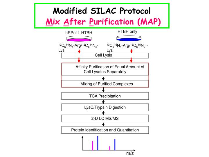 Modified SILAC Protocol