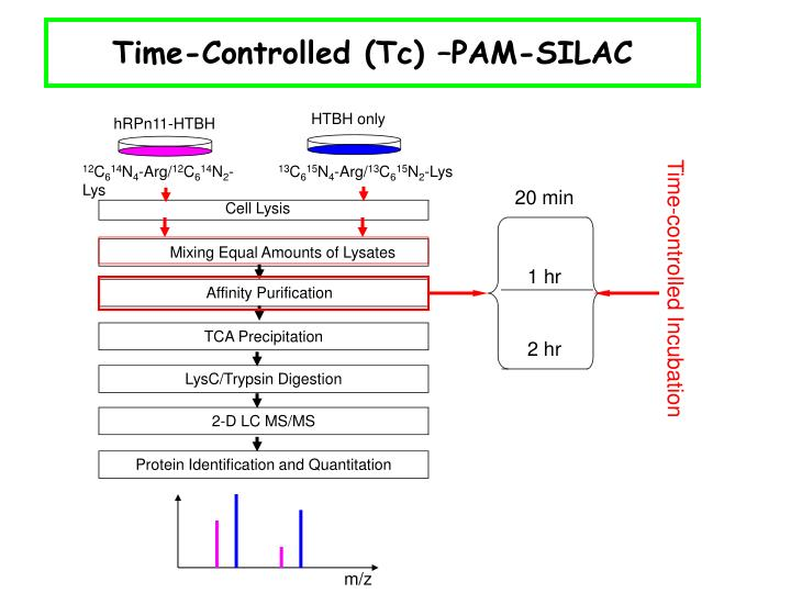 Time-Controlled (Tc) –PAM-SILAC
