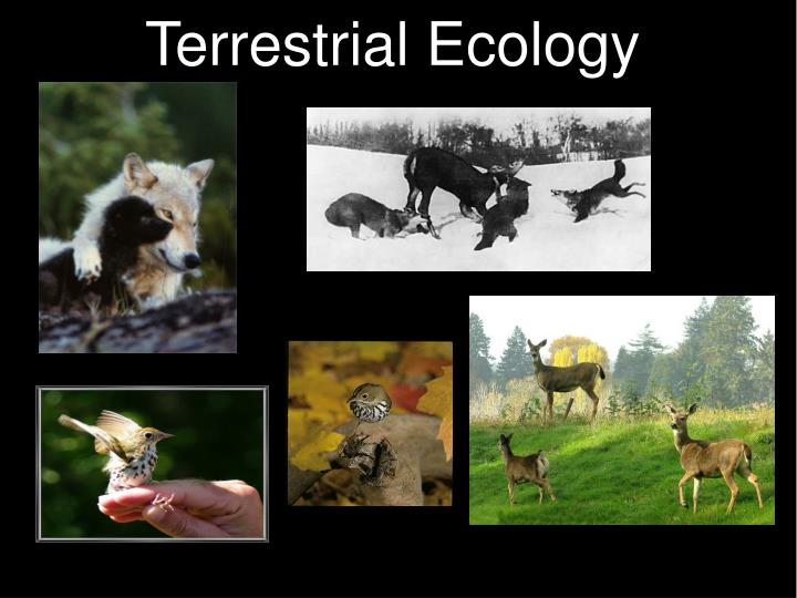 terresterial ecology