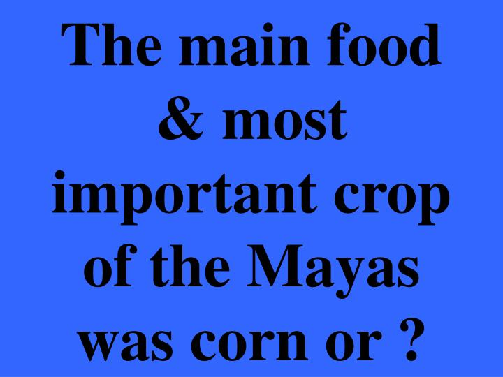 The main food & most important crop of the Mayas was corn or ?