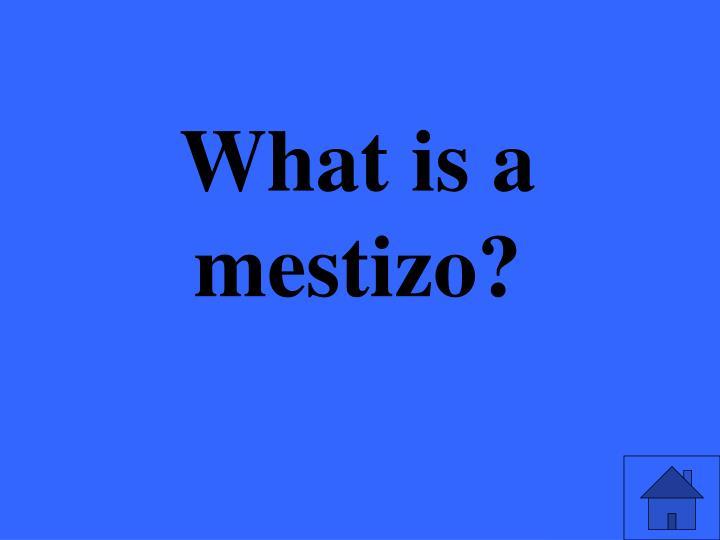 What is a mestizo?