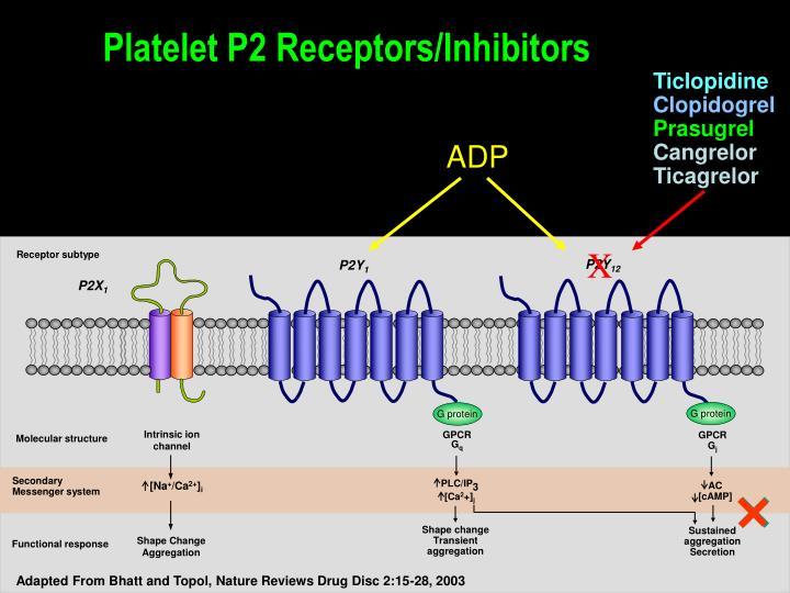 Platelet P2 Receptors/Inhibitors