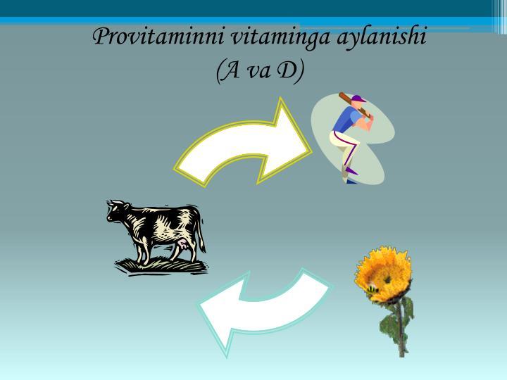 Provitaminni vitaminga aylanishi