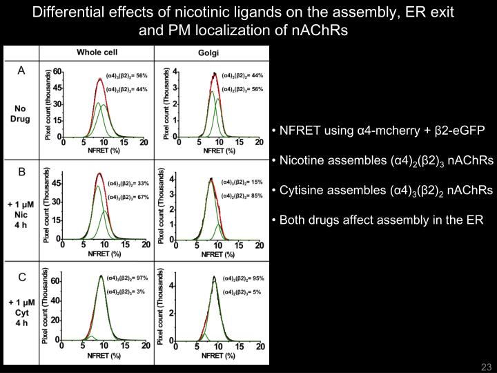 Differential effects of nicotinic ligands on the assembly, ER exit and PM localization of nAChRs