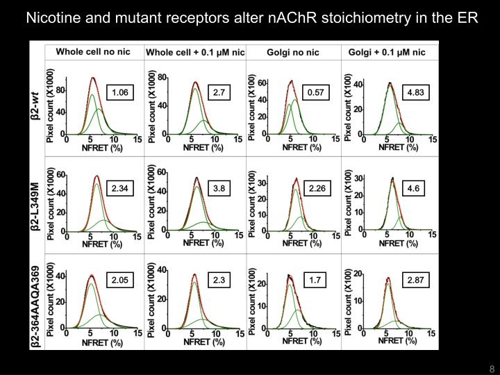Nicotine and mutant receptors alter nAChR stoichiometry in the ER