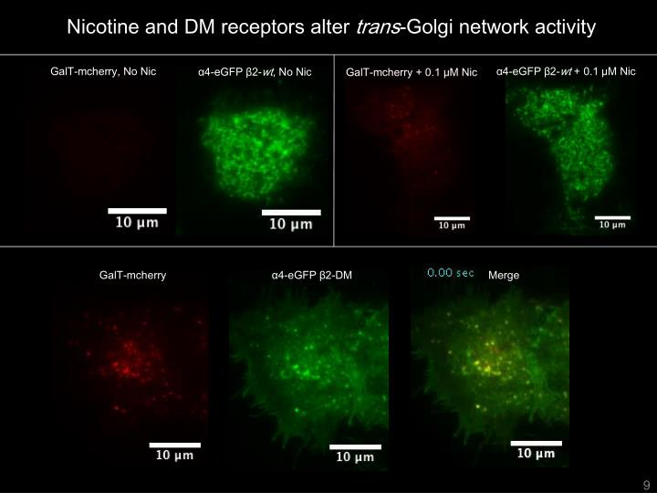 Nicotine and DM receptors alter