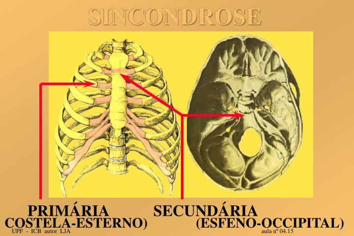 SINCONDROSE