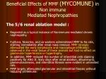 beneficial effects of mmf mycomune in non immune mediated nephropathies