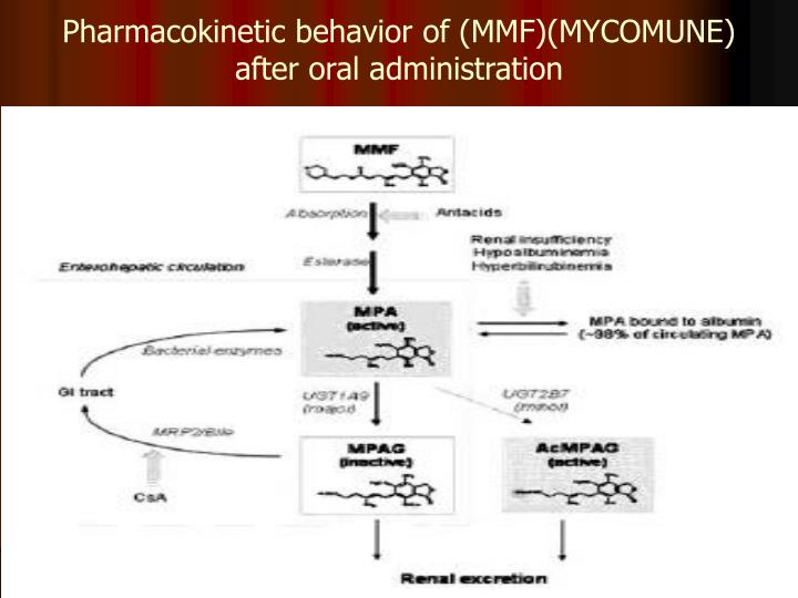 Pharmacokinetic behavior of (MMF)(MYCOMUNE) after oral administration