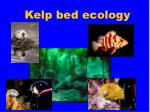 kelp bed ecology
