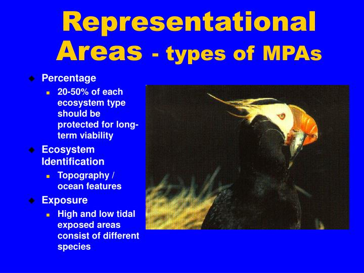 Representational Areas