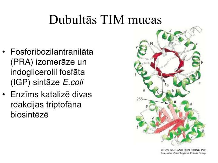 Dubultās TIM mucas