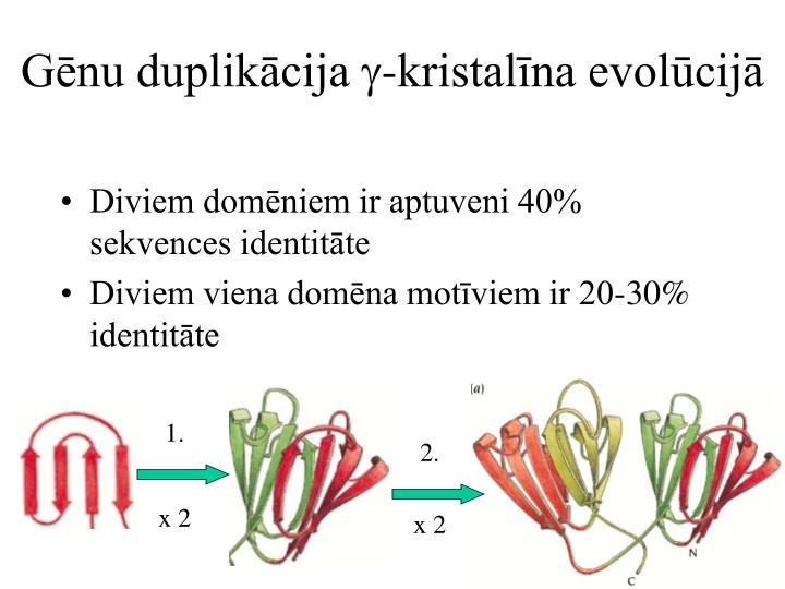 Gēnu duplikācija