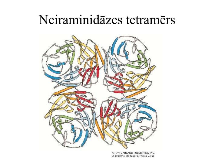 Neiraminidāzes tetramērs